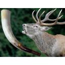 Hlas rujnej jelenice z rohoviny